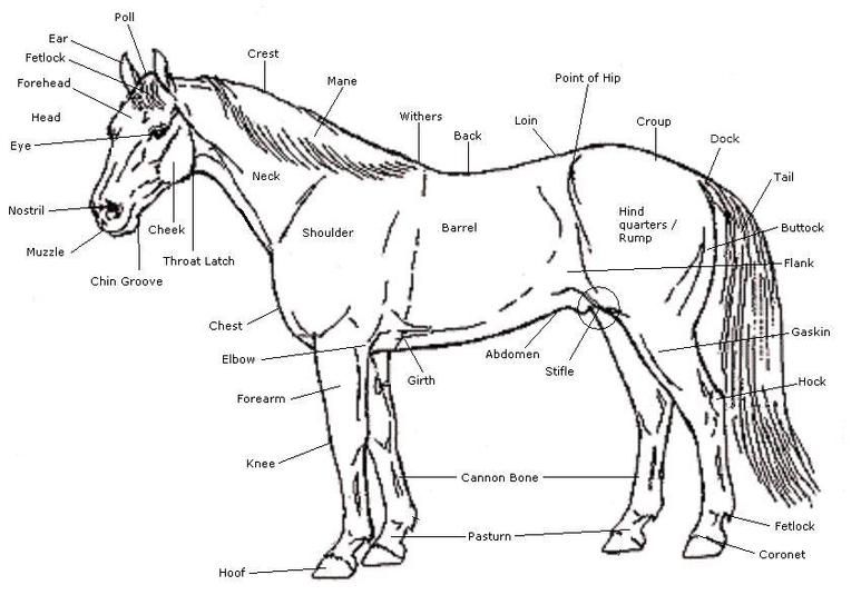 points of the horse and parts of the tack